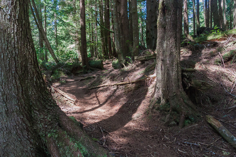 Meandering forest trails