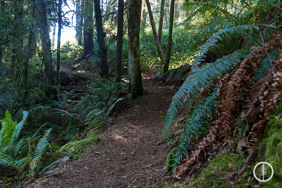 Well maintained trail - Alberni Inlet Trail - PureOutside