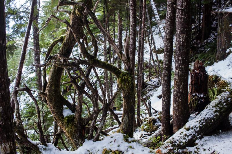 Tree art | Arrowsmith CPR Trail Trip Report