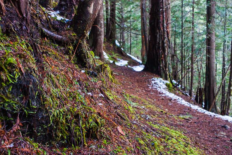 Trail details | Arrowsmith CPR Trail Trip Report
