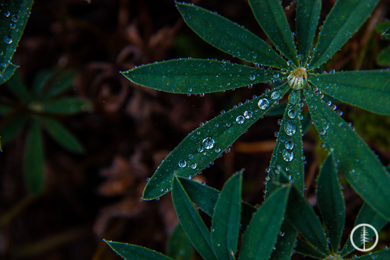 Dew on everything from the mist