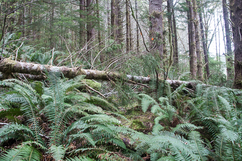 Logs down over the Tuck Lake trail